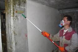 Обработка стены антисептиком