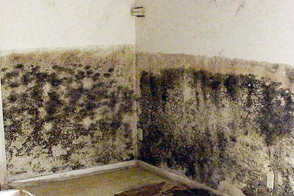 Плесень на стене в комнате