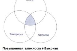 Схема причин образования плесени
